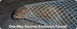 one way squirrel exclusion funnel